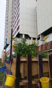 Urban Community Gardening in Hannover, an einem der größten Hochhauskomplexe in Deutschland. Selbstversorgung sieht bei diesen Verhältnissen aus wie eine Utopie. Foto: Dorothea Müth